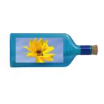Flaschenpost Blume